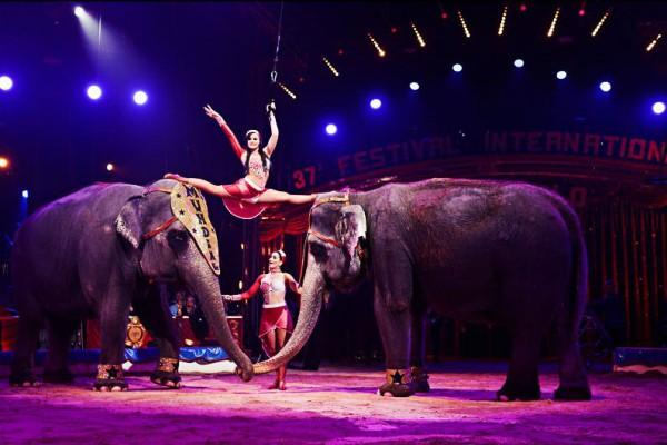 Международный Цирковой Фестиваль