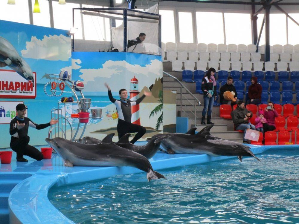 В стоимость билета в парк входит посещение дельфинария - выступали морской котик и 4 дельфинов.