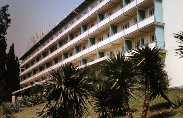 Пальмы, растущие возле гостиницы Ленинградская. СССР, Сочи, 1974 год.