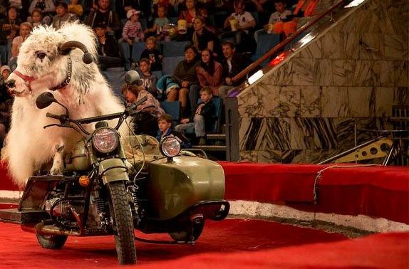 «Бизон шоу» яки на мотоциклах