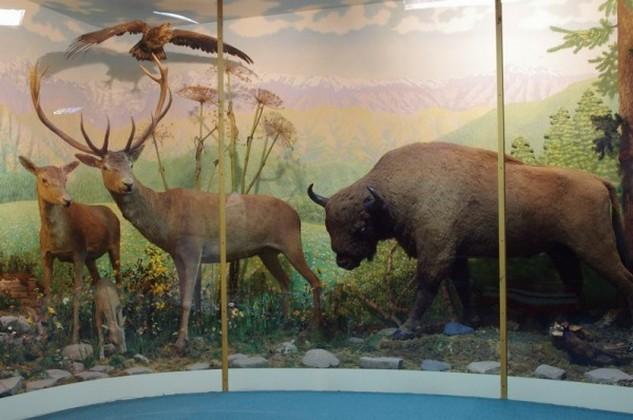 Экспозиция Природа Западного Кавказа