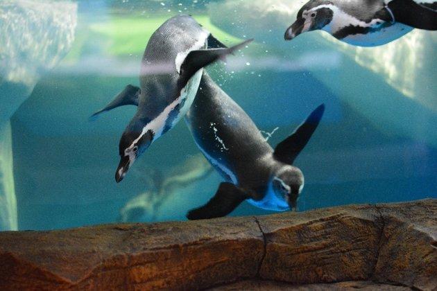 Шоу «Пингвинарий»
