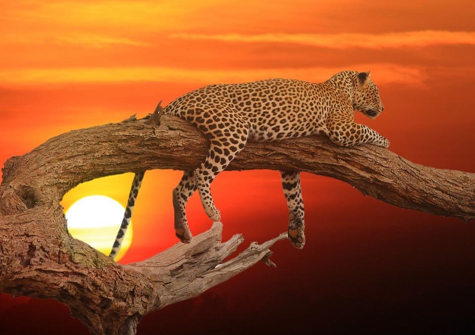 леопард Сочи