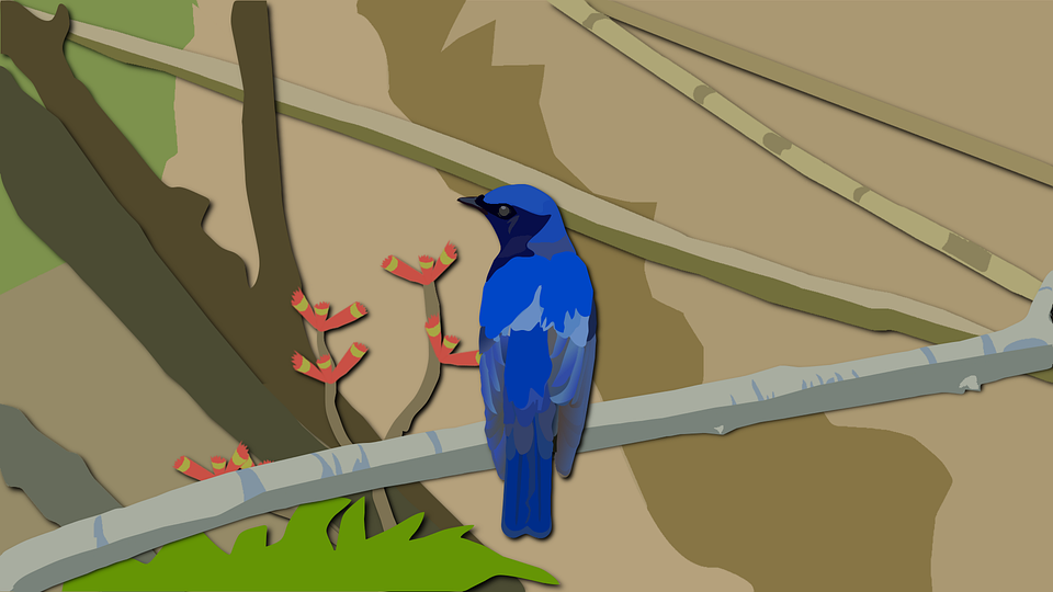 орнитологическом парке
