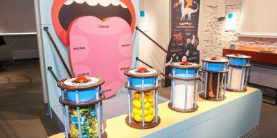 Выставка музея человека «Живые системы»