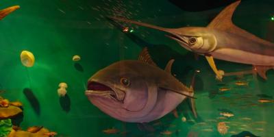 Выставка «Жизнь Черного моря»